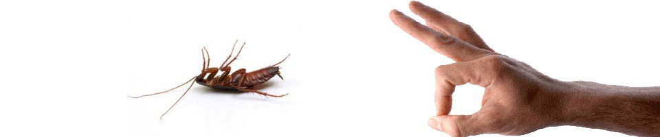 Bed Bug Treatments for Indianapolis